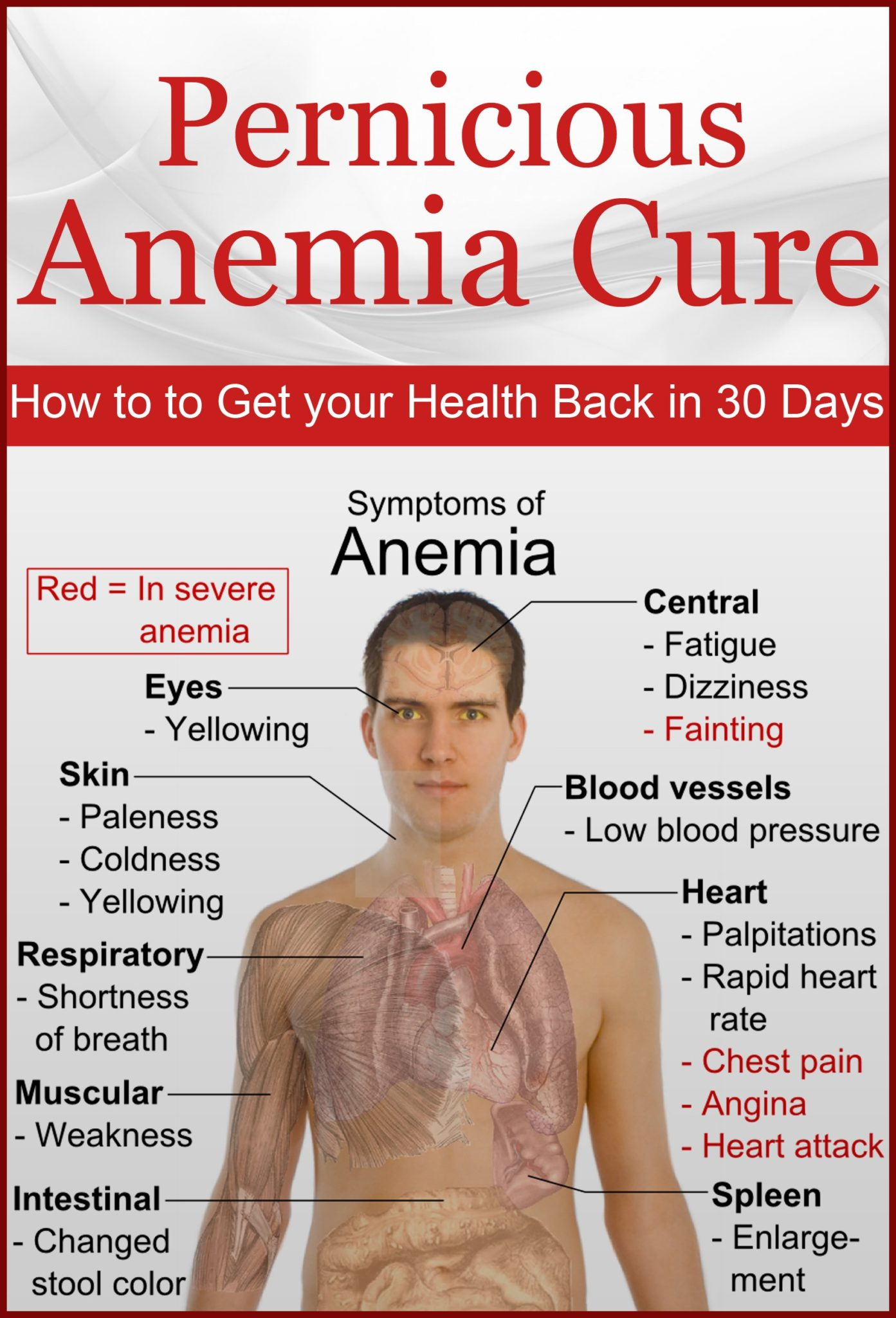 an introduction to the disease pernicious anemia Introduction: pernicious anemia is an autoimmune disease it is characterized by the presence of an autoimmune atrophic gastritis and various autoantibodies that lead to a vitamin b12 deficiency responsible for a macrocytic anemia.